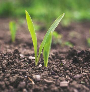 Preparaty do roślin mające odpowiednie właściwości